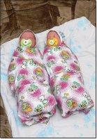 Рождаемость в Ангарске увеличивается, Аисты залетали парами