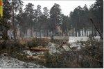 77 деревьев вырубили под очередную автозаправку