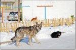 В ангарский травмпункт с жалобами на укусы собак обратилось 33 человека.