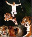 Цирковыми афишами ангарчан не удивишь. С тиграми проще, чем с людьми.
